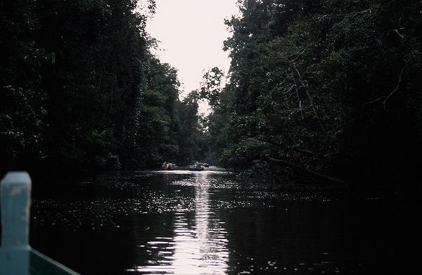 セピロックのオランウータン  2006年2月
