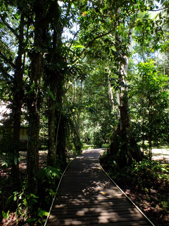 公園内の木道 グヌン・ムル国立公園 2012.7.25