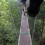 マレーシアの世界遺産 グヌン・ムル国立公園その3  ナイトウォークとキャノピーウォーク
