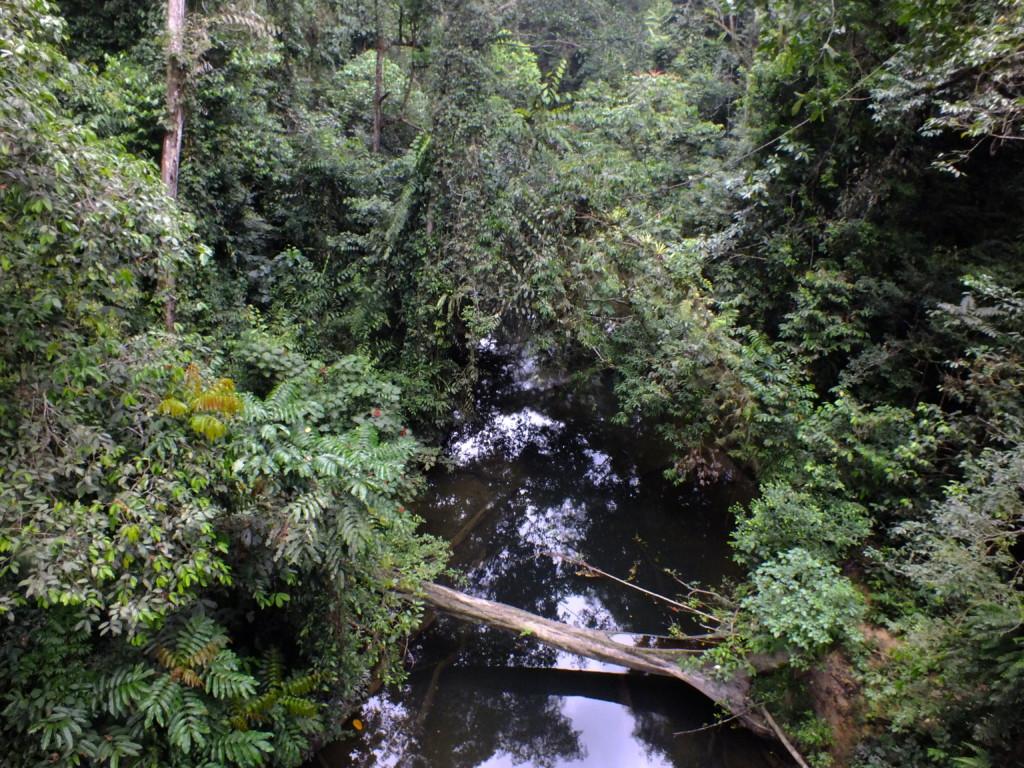 キャノピーウォーク 2012.7.25 グヌン・ムル国立公園