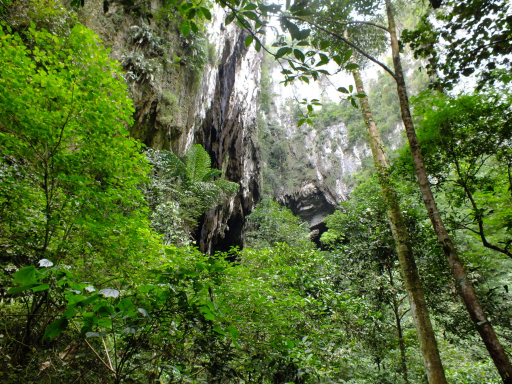 ディアケイブ前のジャングル グヌン・ムル国立公園 2012.7.25