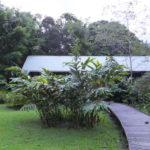 マレーシアの世界遺産 グヌン・ムル国立公園 その5 ジャングル内に泊まってみた
