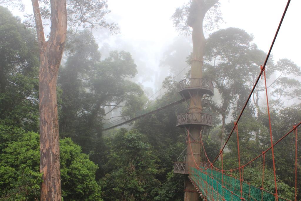 熱帯雨林とキャノピーウェイ 2012.7.1 ダナンバレー