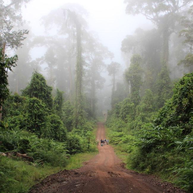 ダナンバレーの豊かな森   2012.7.1