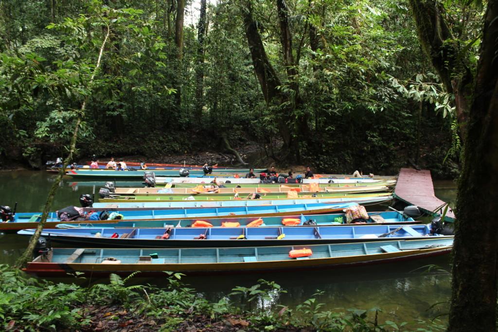 川で泳ぐ グヌン・ムル国立公園 2012.7.26