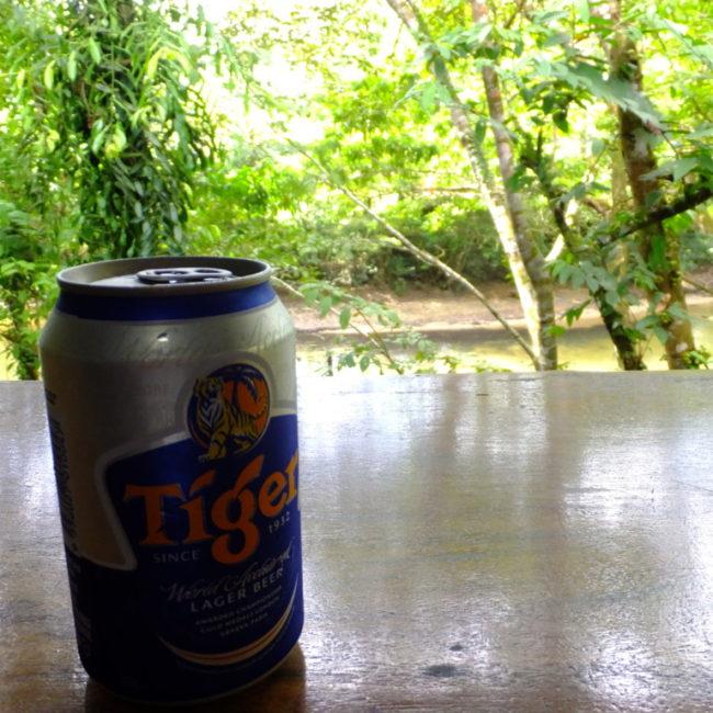 ジャングルの流れを見ながら飲むタイガービール