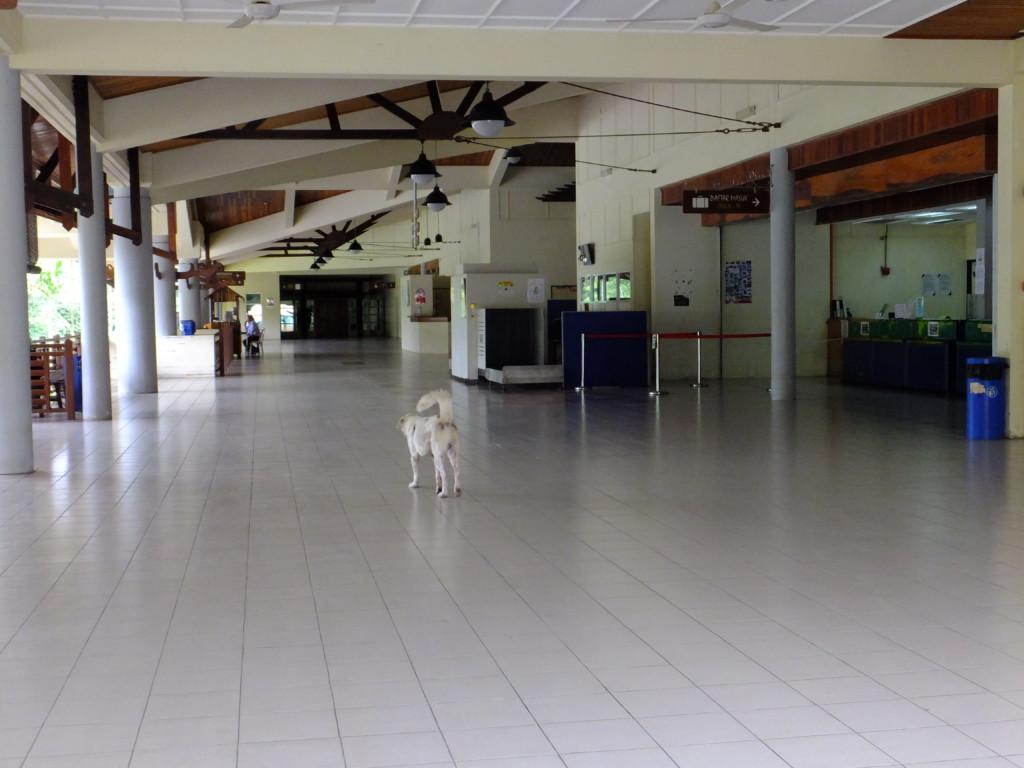 犬しかいないムル空港 2017.2.16