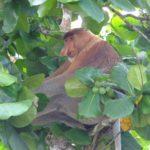 マレーシア、ボルネオ島のバコ国立公園で見られた生き物