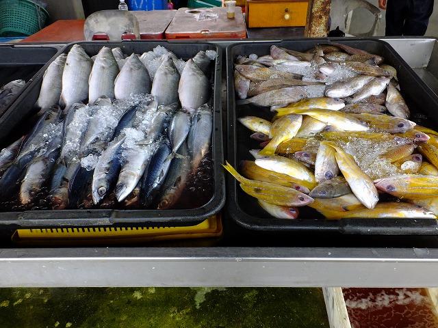 生の魚 バコ